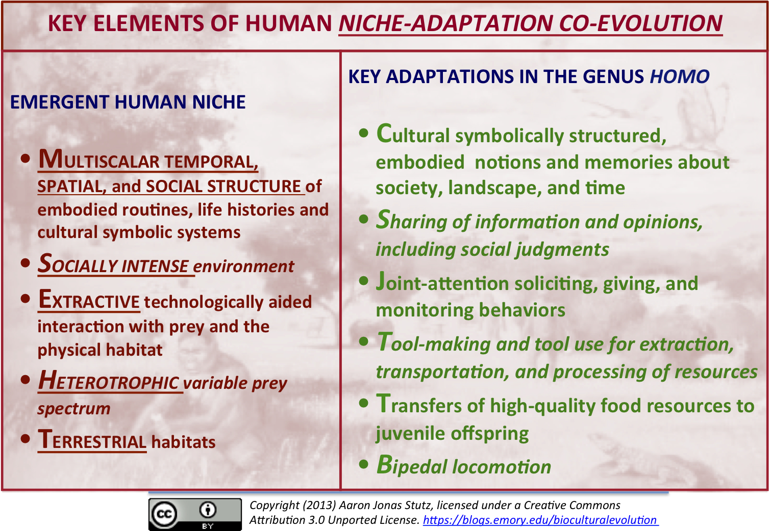 Non Nested Hierarchy And The Human Niche The Biocultural Evolution