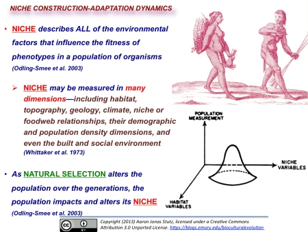 niche-construction-adaptation dynamics