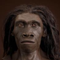 Forensic artist John Gurche's reconstruction of the skull KNM ER-3733, one of the best preserved early Homo erectus specimens (ca. 1.7 million years old) from East Africa. Image is hyperlinked to the source on the Smithsonian Institution's website. Chip Clark, photographer.