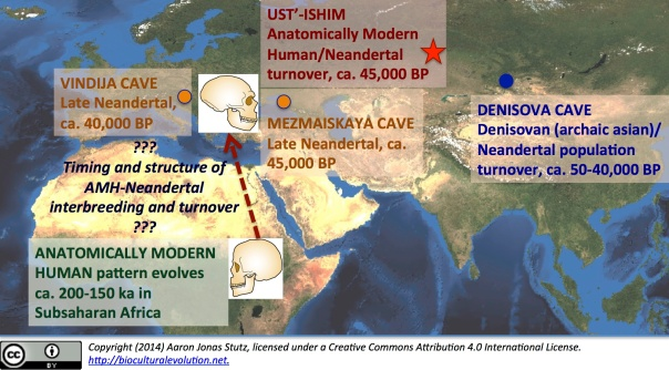 The Ust'-Ishim femur--and associated, reconstructed genome--in Eurasian and African biogeographic context. Ancient DNA research is revealing a greater complexity of population turnover dynamics than previously thought for the evolution of the genus Homo.