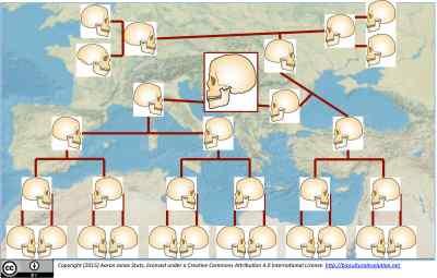 Oase 1 family tree
